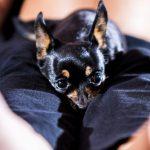 Come aiutare i bambini a superare la morte di un cane – Ciao Niky! –