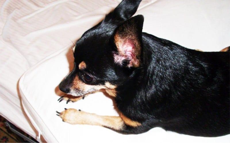 come aiutare i bambini a superare la morte di un cane