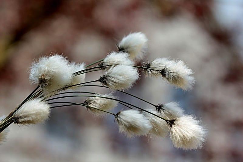 vestire naturali con il cotone